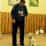 Getting focus in Rally Obedience Class